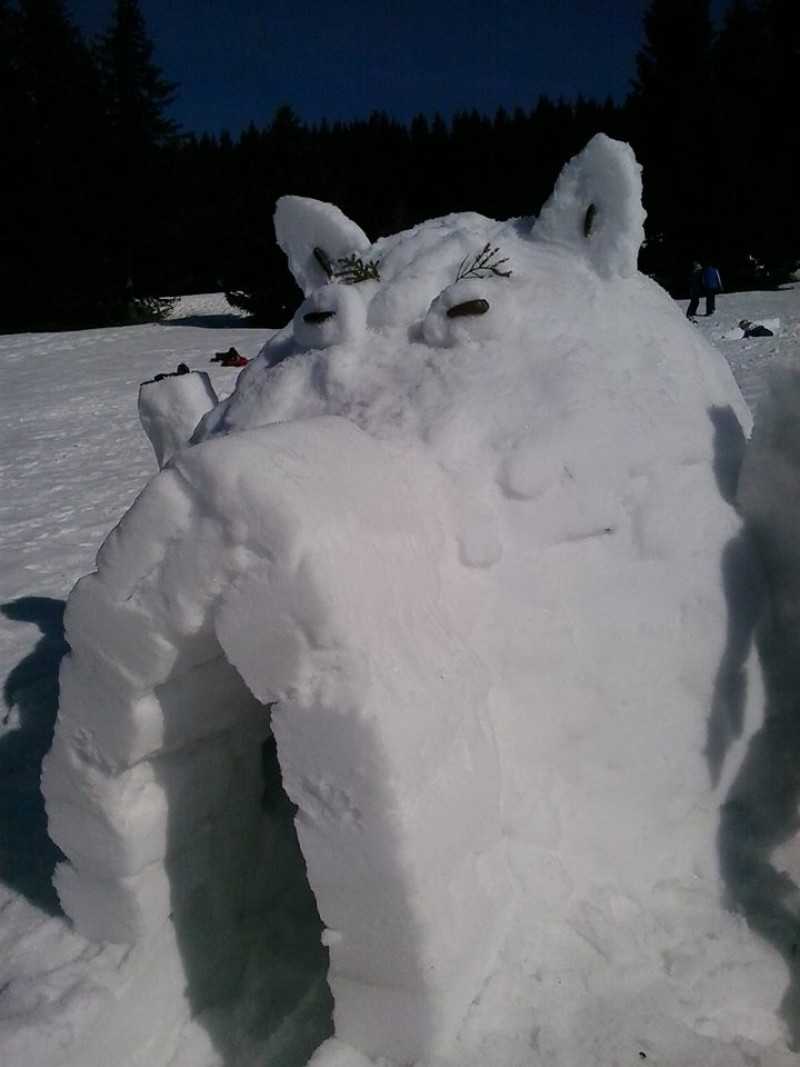 Photo - Igloo dahu